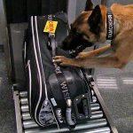 Что запрещено брать в самолет: проверка