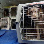 Клетка для перевозки собак в самолете