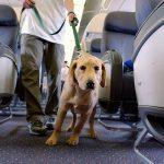Правила провоза собак: исключения