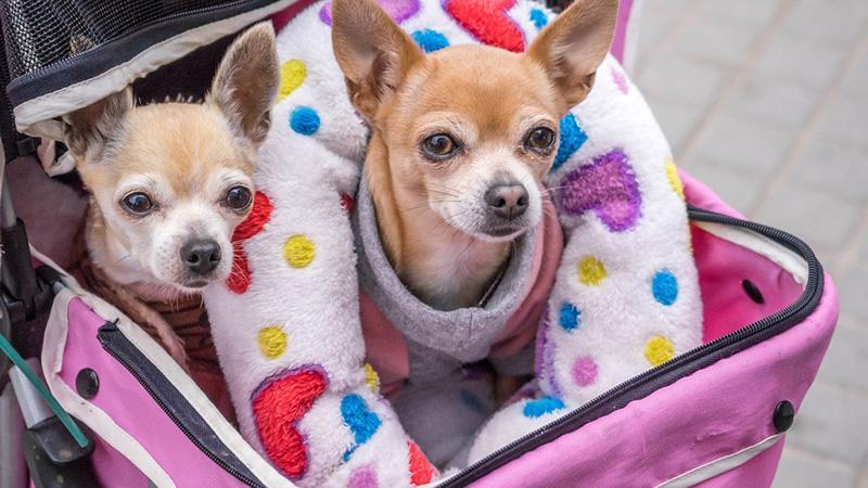 Перелет с животными в самолете: везем в салоне