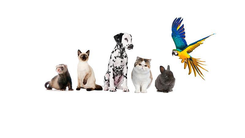 """""""Аэрофлот"""": перевозка животных"""
