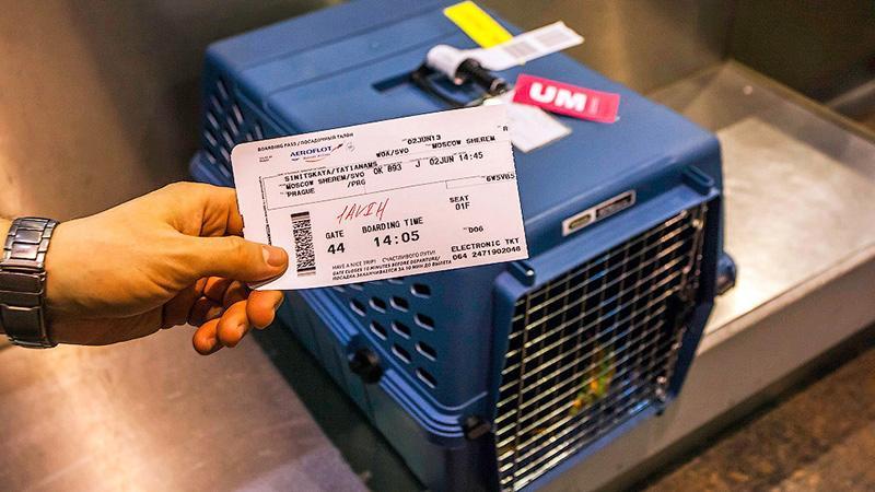 """Правила перевозки животных в самолете """"Аэрофлот"""""""