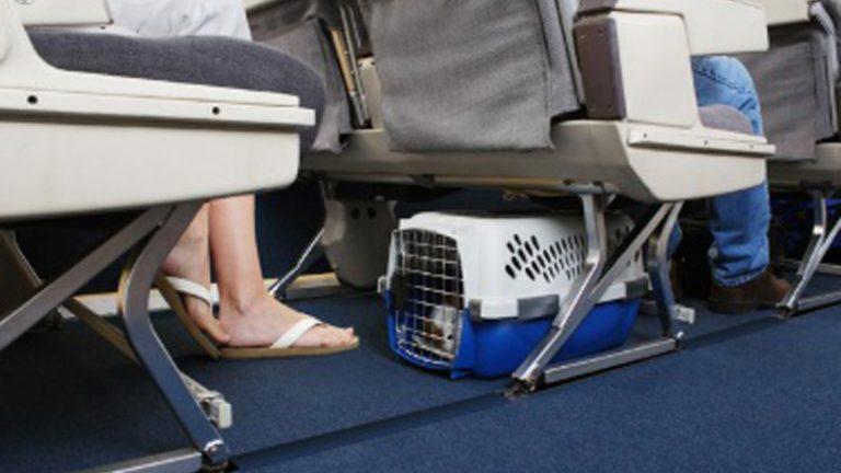 Перевозка для животных в самолете