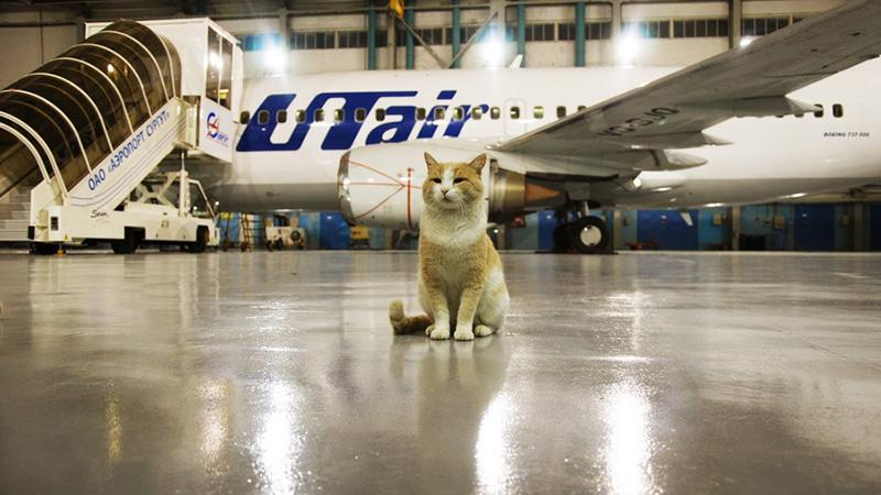 Перевозим кошку в самолете: что нужно знать