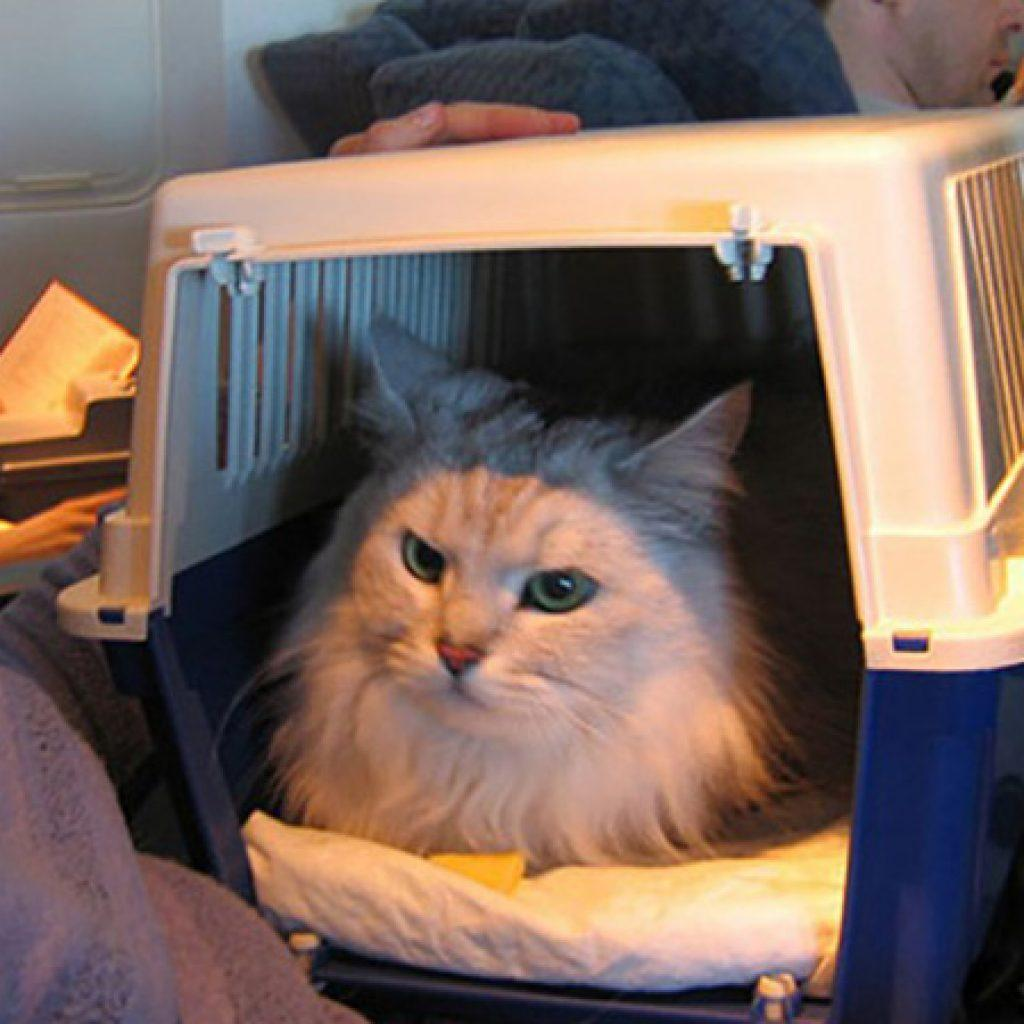 Взять кота с собой в самолет