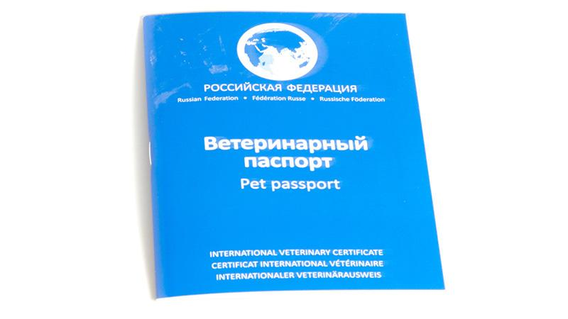 Как перевезти кошку в самолете по России: документы