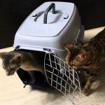 Правила перевозки кошек в самолете по России