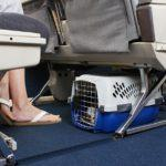 Перевозим котов по России: правила перелета в салоне