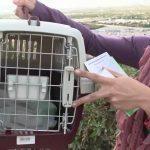 Особенности перевозки в самолете котов: готовимся к путешествию