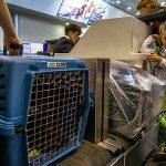 Провозим кота в самолете по России: правила и нюансы