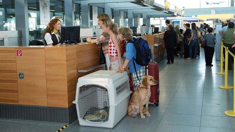 """Правила перевозки животных в салоне """"ЮТэйр"""" и багажном отделении самолета"""