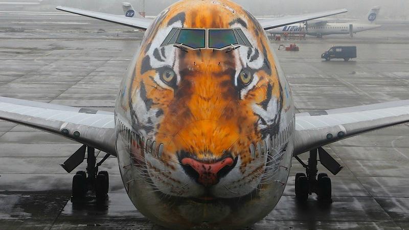 """Что такое """"Тигролет"""" (авиакомпания Россия) и зачем ему такая раскраска"""