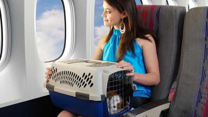 """Как перевозить вещи в самолетах """"Белавиа"""": багаж и ручная кладь"""
