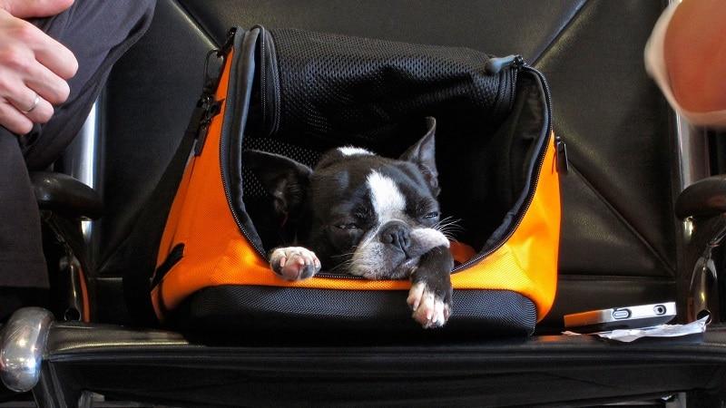 """Как провозить вещи, не нарушая правил в """"NordStar"""" (Нордстар): ручная кладь и допустимый багаж"""